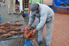 Langusten auf dem Fischmarkt